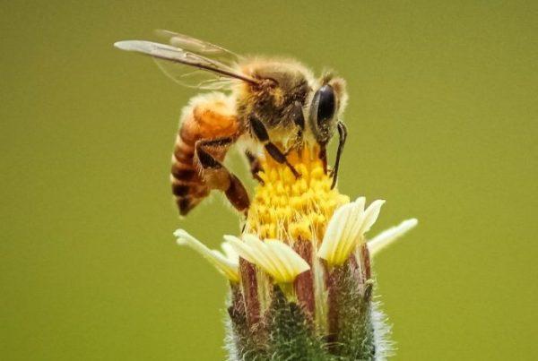 Manuka Honey NZ